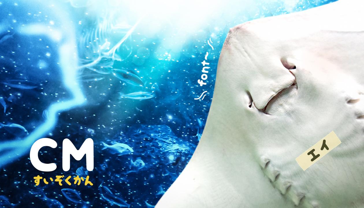 【TV】お茶の間で視聴。サンシャイン水族館のテレビCMでフォント使用例 。o○(かわいい生き物がいっぱいだ~)
