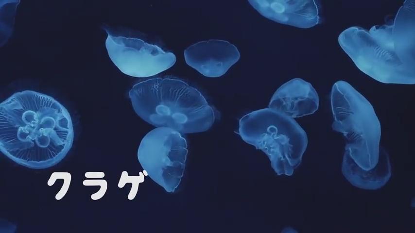 【フォント使用例】サンシャイン水族館 テレビCM スクリーンショット(クラゲ)