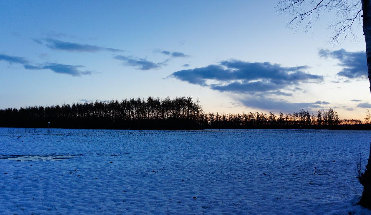 【冬の朝日と十勝牧場の白樺並木道】白樺並木道右側(左側)写真。雪が積もってる。
