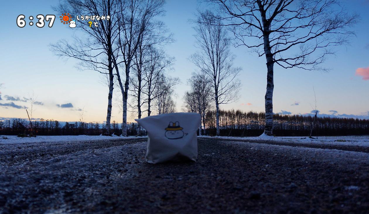 【冬の朝日と十勝牧場の白樺並木道】(6:37)ちょっと~ そこにいたら白樺並木が見えないでしょ~