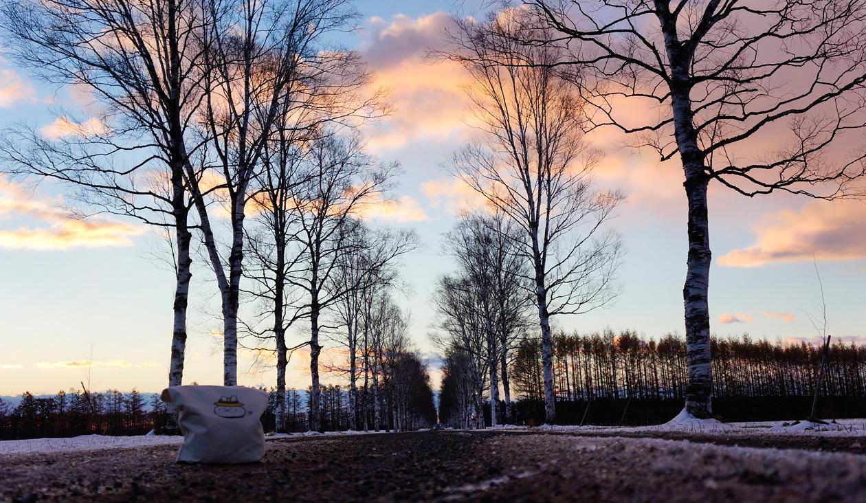 【冬の朝日と十勝牧場の白樺並木道】(6:43)朝日でてきた。冬の青空と朝日と雪景色。白樺並木きれいだお~