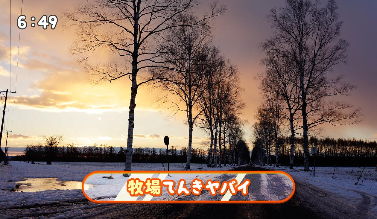 【冬の朝日と十勝牧場の白樺並木道】(6:49)あっ 牧場天気やばい。なんか西から暗黒雲が・・・