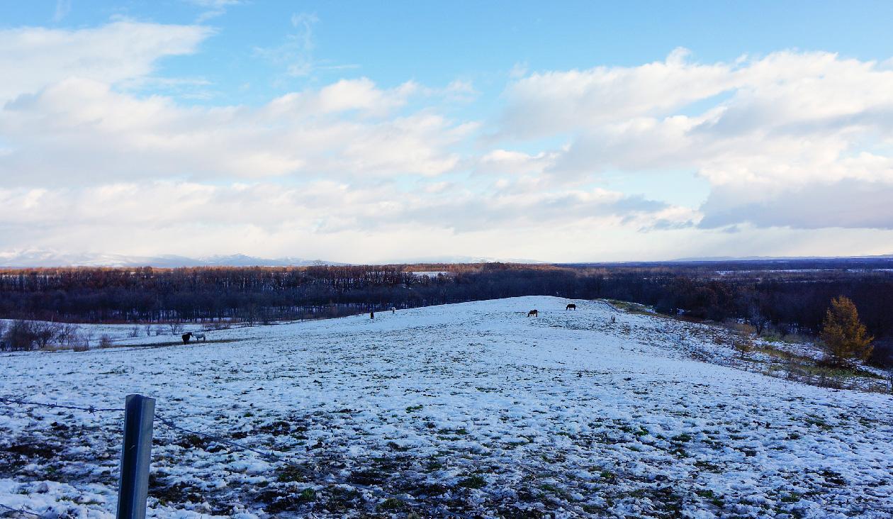 【冬の十勝牧場展望台へ徒歩でウォーキング】あっ! あそこにいるのは馬? 雪原に朝から馬がいるよ~