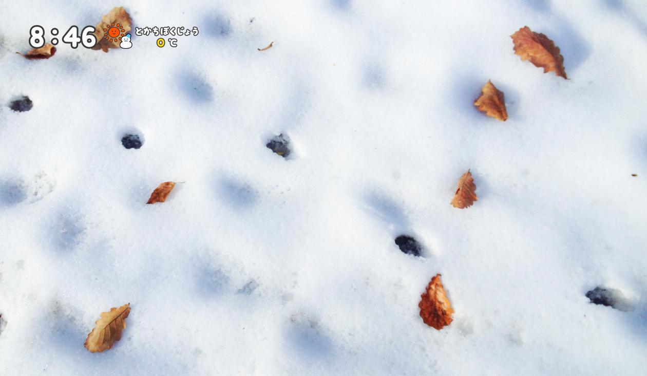 【牧場で食べるおいしい朝ごはん】(8:46)ふわふわの雪の絨毯と落ち葉。ところどころに小動物の足跡、きつねかな?
